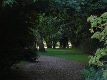 Alberi di estate in parco di Hertfordshire Immagini Stock