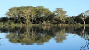 Alberi di febbre e paesaggio del lago video d archivio