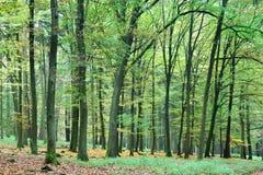 Alberi di Forest Park Fotografia Stock