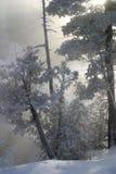 Alberi di gelo del Hoar Immagine Stock