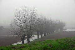 Alberi di gelso in mezzo della nebbia in pianura italiana immagini stock