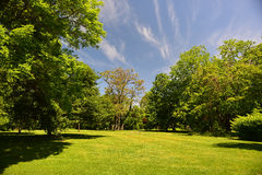 Alberi di inizio dell'estate ed erba fresca e un cielo blu Immagini Stock Libere da Diritti