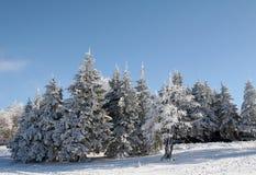 Alberi di inverno Fotografia Stock