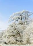 Alberi di inverno Immagini Stock Libere da Diritti