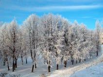 Alberi di inverno Immagine Stock Libera da Diritti