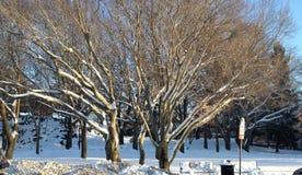 Alberi di inverno Fotografie Stock