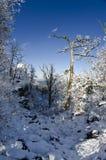 Alberi 2 di inverno fotografia stock