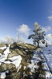 Alberi 3 di inverno fotografie stock libere da diritti