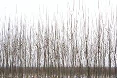 Alberi di inverno Immagini Stock