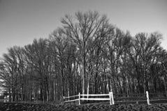 Alberi di inverno. immagine stock libera da diritti