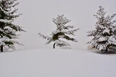 Alberi di inverno Fotografia Stock Libera da Diritti
