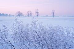 Alberi di inverno all'alba fotografie stock libere da diritti