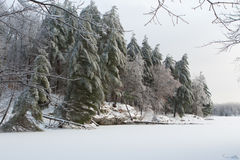 Alberi di inverno caricati neve Immagini Stock