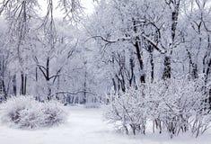 Alberi di inverno con neve Immagine Stock