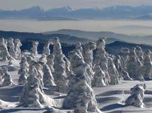 Alberi di inverno coperti da neve Immagini Stock