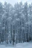 Alberi di inverno coperti di neve fotografia stock