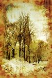 Alberi di inverno dell'annata Immagini Stock