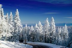Alberi di inverno della montagna del New Mexico con neve Fotografia Stock