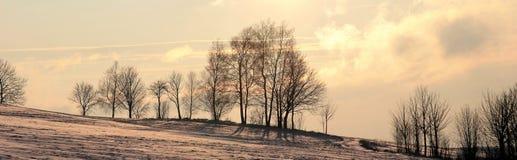 Alberi di inverno di paesaggio Fotografia Stock Libera da Diritti