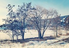 Alberi di inverno lungo il lago congelato immagine stock