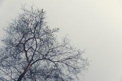 Alberi di inverno senza foglie verdi nella sera triste immagini stock libere da diritti