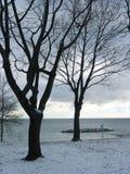 Alberi di inverno sopra lakeshore Fotografia Stock