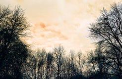 Alberi di inverno sul fondo arancio del cielo fotografia stock