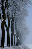 Alberi di inverno vicino alla strada Fotografia Stock