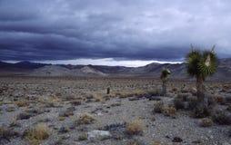 Alberi di Joshua nel deserto di Mojave Fotografia Stock