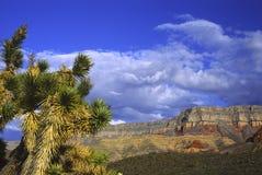 Alberi di Joshua nell'Utah Fotografia Stock Libera da Diritti