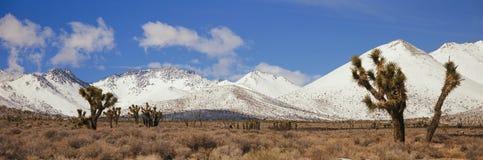 Alberi di Joshua nella sierra montagne di Nevada fotografia stock