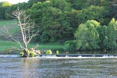 Alberi di larghezza del fiume Immagine Stock