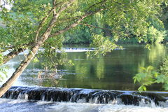 Alberi di larghezza del fiume distendasi Immagini Stock