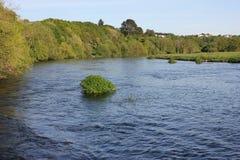 Alberi di larghezza del fiume distendasi Fotografia Stock