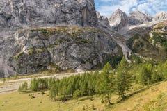 Alberi di larice che crescono in Val Ombretta vicino alla montagna di Marmolada in dolomia Fotografia Stock Libera da Diritti