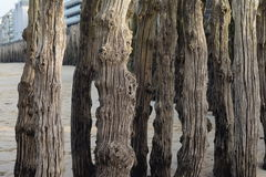 Alberi di legno Fotografie Stock