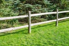 Alberi di legno del sempreverde e del recinto Fotografie Stock Libere da Diritti