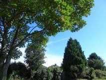 Alberi di luccichio con le foglie che luccicano nel vento d'ardore Fotografie Stock Libere da Diritti