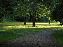 Alberi di luccichio in parco di Hertfordshire Fotografia Stock Libera da Diritti