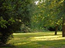 Alberi di luccichio in parco di Hertfordshire Fotografia Stock