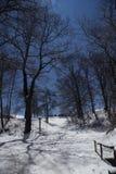 Alberi di luce della luna Fotografie Stock Libere da Diritti