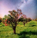 Alberi di mandarino arancio della piantagione nell'isola Italia Sicilia del giardino Cielo notturno vibrante con le stelle e nebu fotografia stock libera da diritti