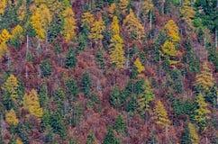 Alberi di Mointain in autunno Fotografia Stock