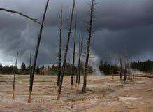 Alberi di morte in Yellowstone Fotografia Stock
