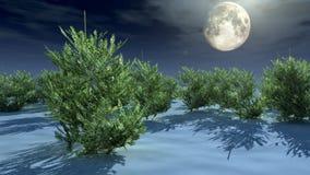 Alberi di Natale nell'ambito di luce della luna Immagini Stock