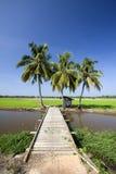 Alberi di noce di cocco e del ponticello Fotografia Stock
