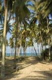 Alberi di noce di cocco in Terengganu, m. fotografia stock libera da diritti