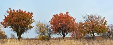 alberi di Panorama-autunno immagini stock libere da diritti