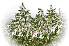 Alberi di pino con i fiocchi di neve immagini stock libere da diritti