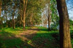 Alberi di pino dalla spiaggia Fotografie Stock